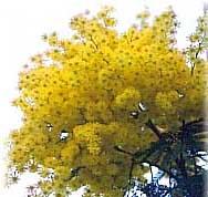 Кроссворд деревья