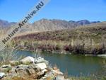 Цветущий маральник над рекой Катунью